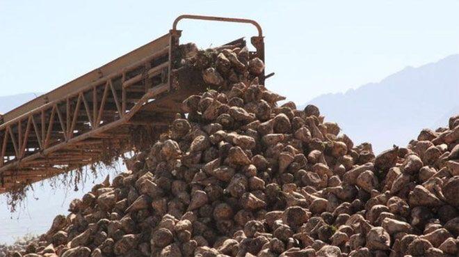 Tarım Bakanı'ndan şeker fabrikası açıklaması