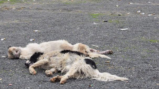Köpeklerin ölüm nedeni belli oldu
