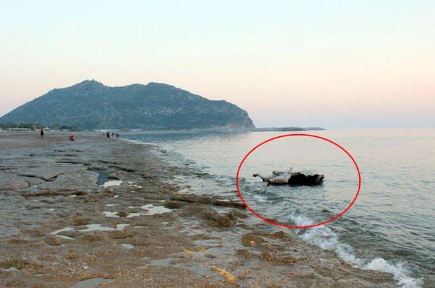 Antalya sahilinde ilginç görüntü ! Kıyıya vurdu...