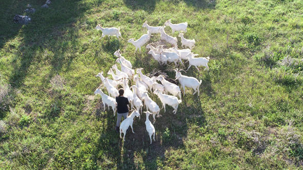 ''Nişantaşı kızı'' şimdi köyde keçi güdüyor