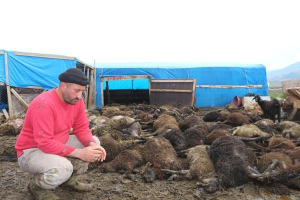 100 koyun telef oldu, elinde bir keçisi kaldı