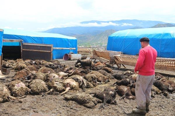 100 koyun telef oldu, elinde bir keçisi kaldı - Resim: 4