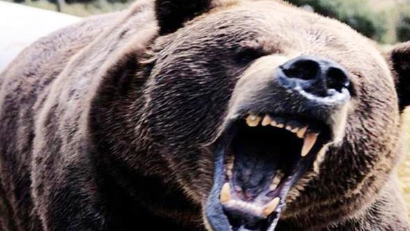 Erzurum'da ayının saldırdırdığı bir kişi öldü !