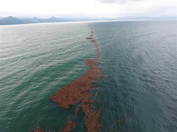 Bakan açıkladı: 700 ton fındık zarar gördü