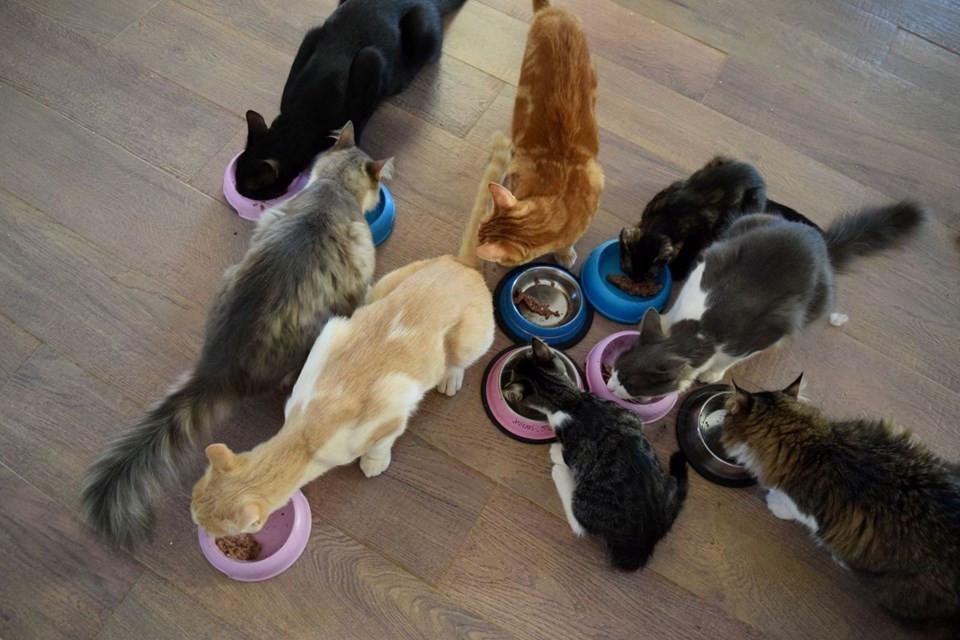 Deniz manzarası eşliğinde 55 kediye bakıp maaş almak ister misiniz?