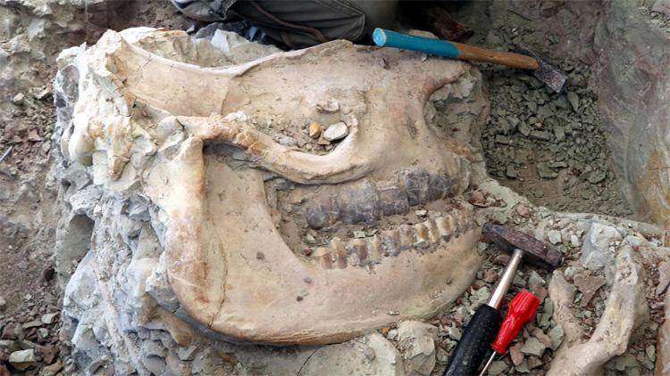 Çankırı'da 8,5 milyon yıllık fosil bulundu