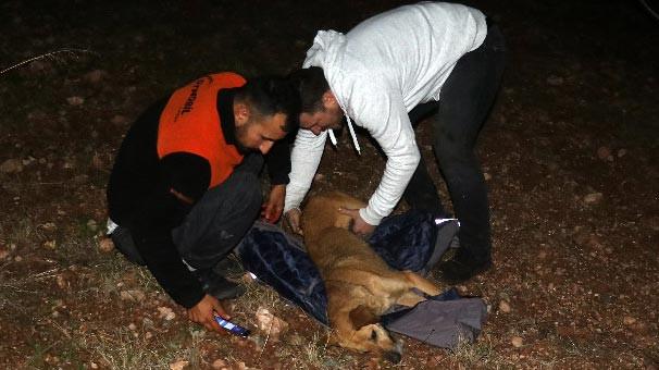 Uçuruma düşen köpek kurtarıldı