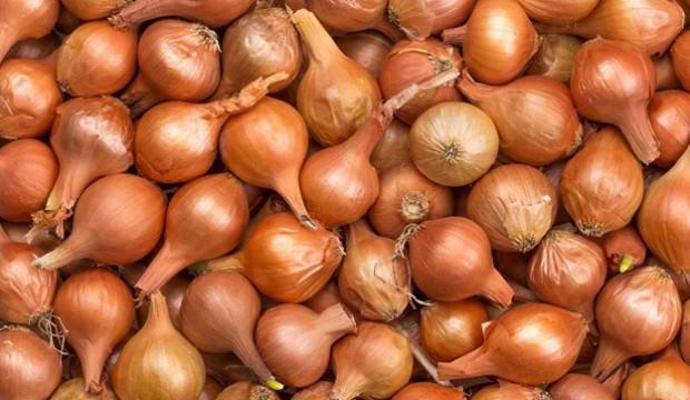 Soğan fiyatı 10 TL'ye çıkabilir