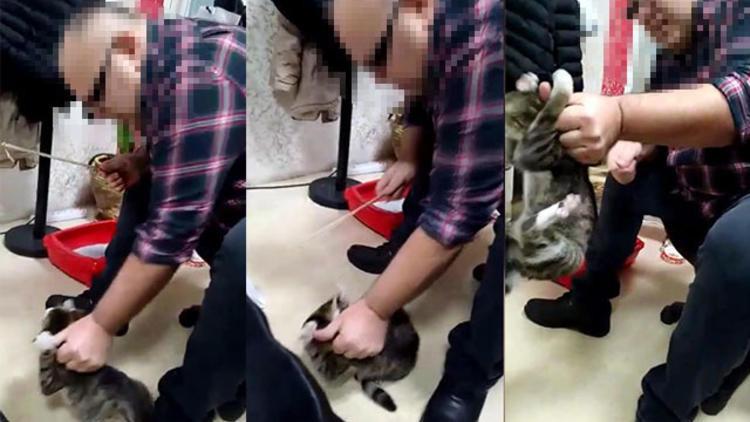 Kediye işkence eden işadamı gözaltına alındı