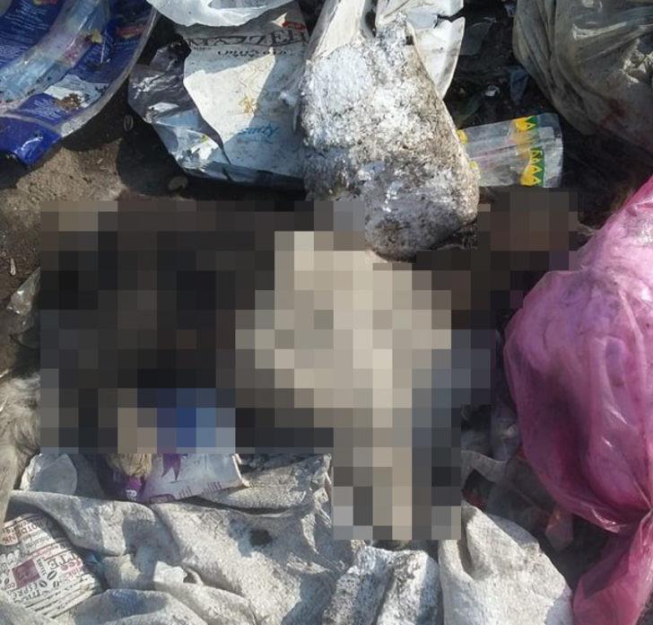 Ölü bedenleri çöpten topladılar