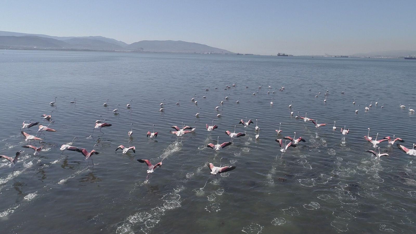 Flamingoların Türkiye'deki görsel şöleni böyle görüntülendi