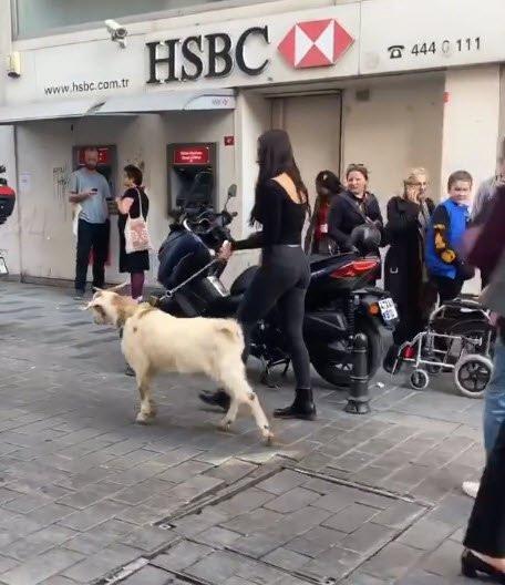 Zeynep Alkan İstanbul sokaklarında keçi gezdirdi