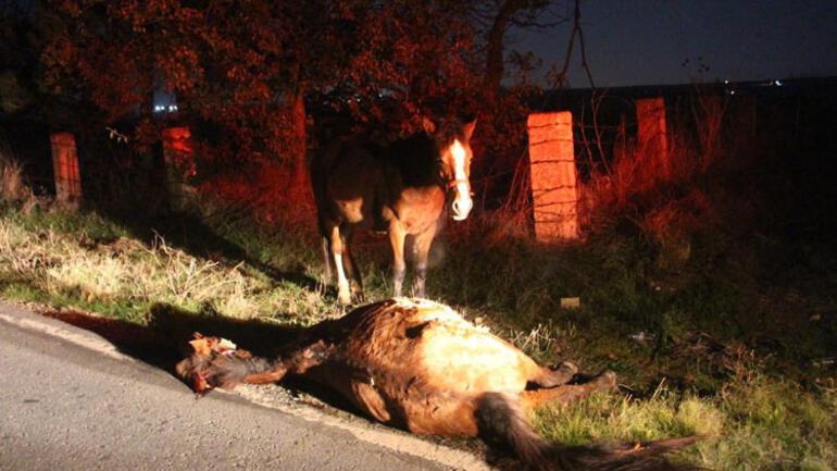 Telef olan atın başında bekledi