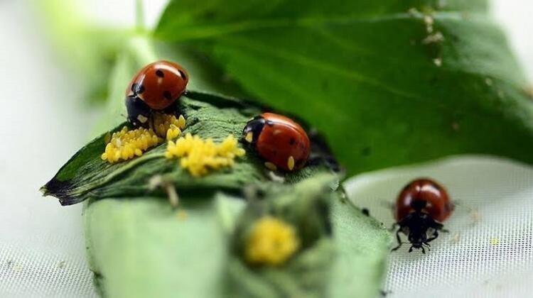 Dünyadaki böcekler yok olursa, ne olur?