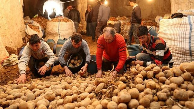 Patates üreticilerinden ''sıfır gümrük'' tepkisi