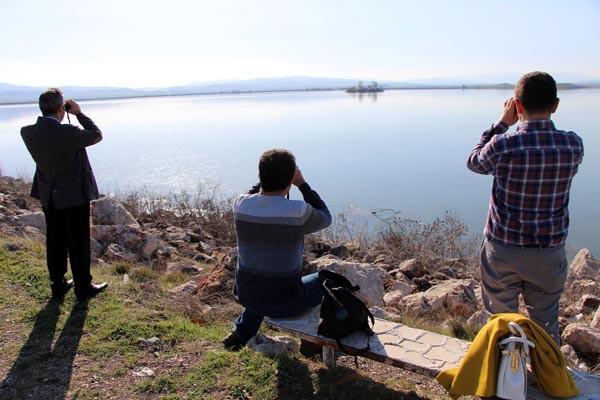 Ak pelikanları görebilmek için göle akın ettiler