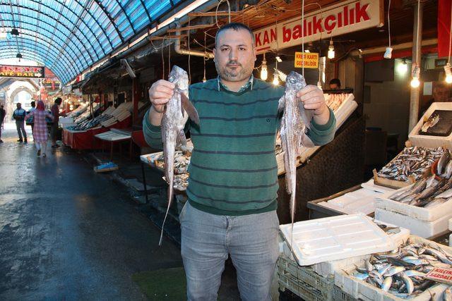 Mersin'de 'Şeytan Balığı' yakalandı