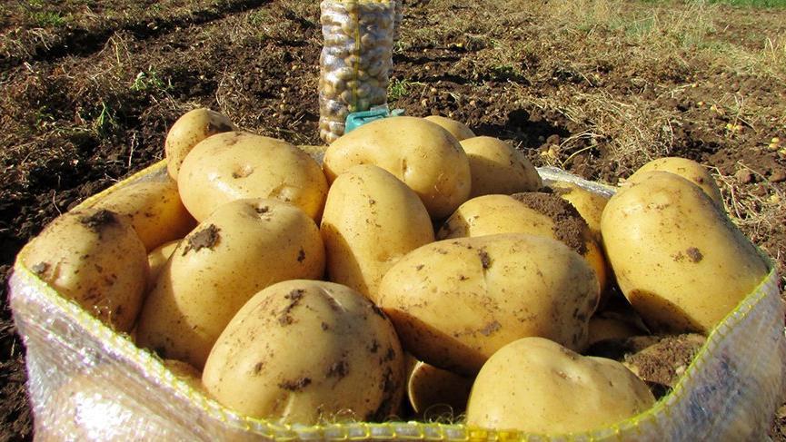 Patates 10 TL'nin altına düşmez !