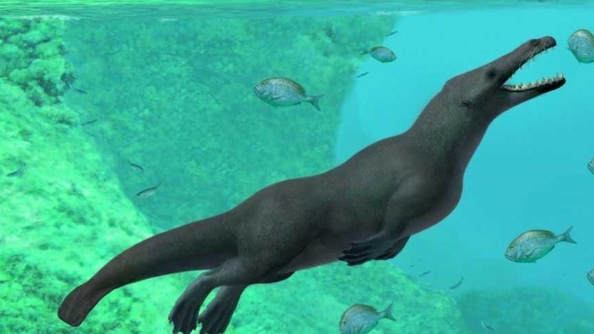 43 milyon yaşında 4 bacaklı balina fosili bulundu