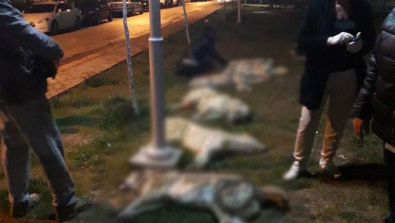 Ankara'daki köpek katliamı hakkında yeni görüntüler !