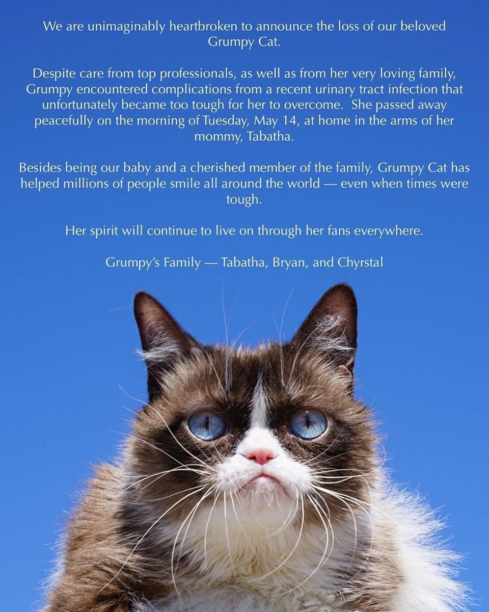 Fenomen kedi ''Grumpy Cat'' öldü