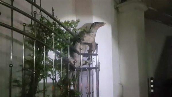 Evin bahçesindeki dev korku saldı