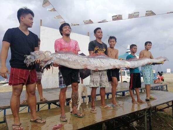 Kıyıya vuran kürek balığı deprem paniğine neden oldu