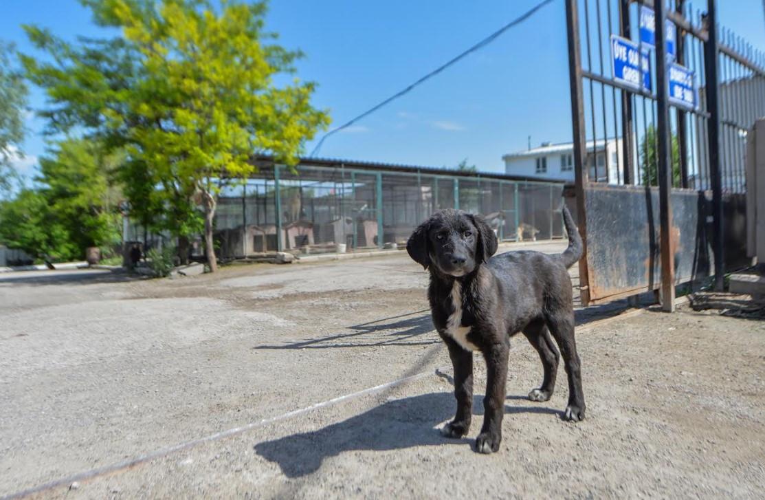 Hayvanseverler Başkent'te sokak hayvanları için buluşacak