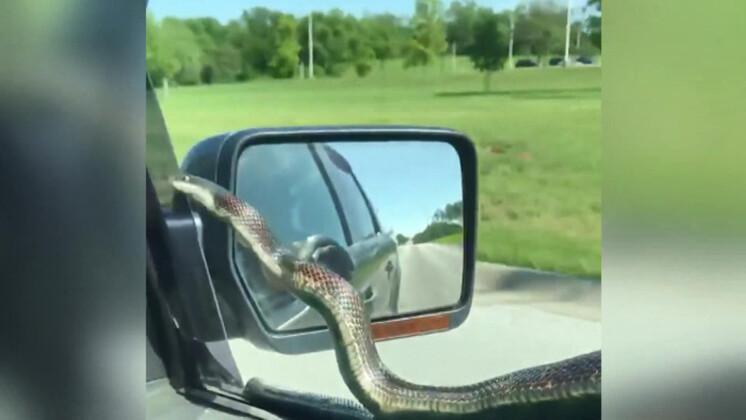 Yolcuları korkuttu ! Otomobilin camında yılan...
