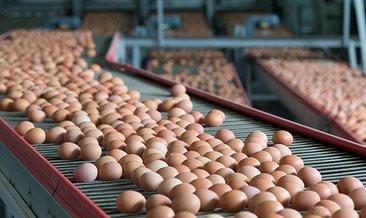 Yumurta fiyatlarının neden ucuzladığı belli oldu