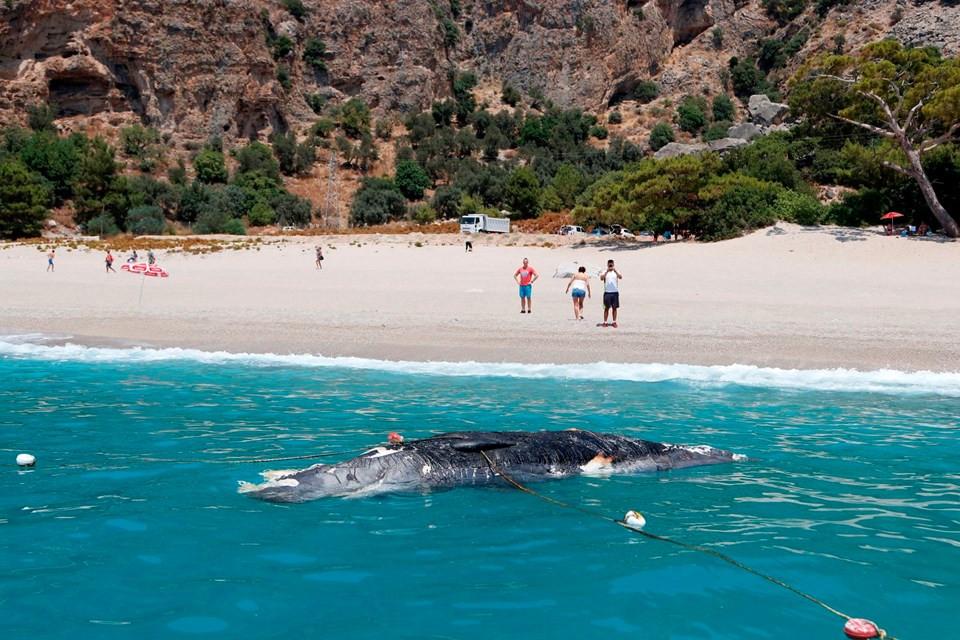 Fethiye'de ölü balina kıyıya vurdu