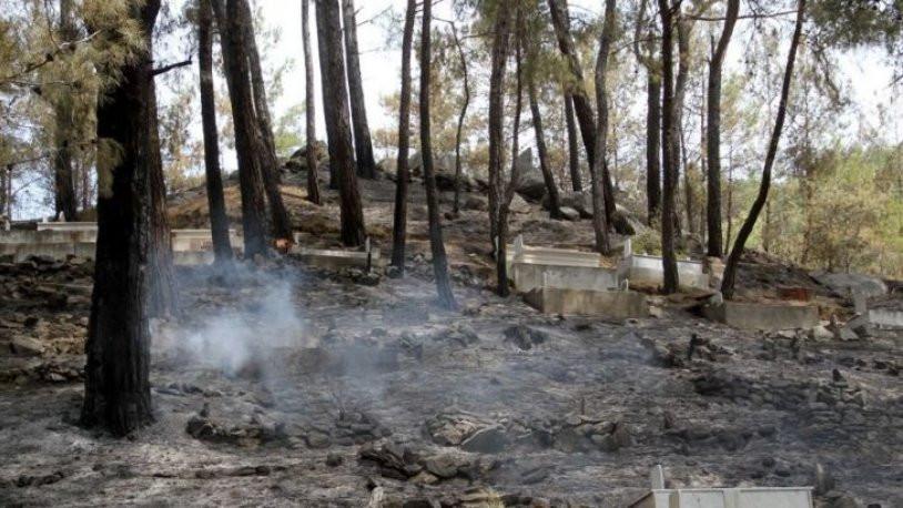 HDP'li vekilden orman yakanlara tepki !
