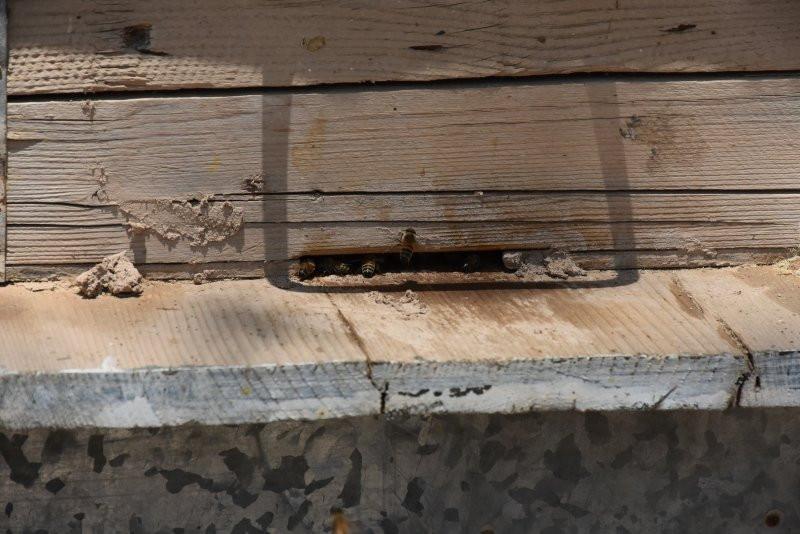 Milyonlarca arının ölümü dünyayı alarma geçirdi