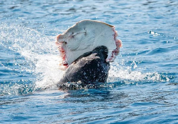Yer: Antalya... Akdeniz foku böyle görüntülendi