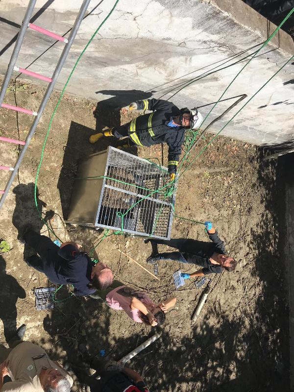 Bursa'da ayı kurtarma operasyonu