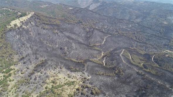 İzmir'deki orman yangınının ardından acı görüntüler