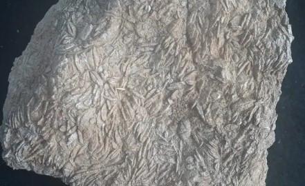 Gabar Dağı'nda 45 milyon yıllık deniz fosilleri bulundu
