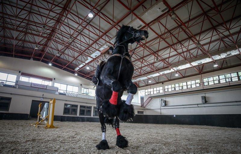 Gemlik atı TSK'nın 'heybetli yüzü' oldu