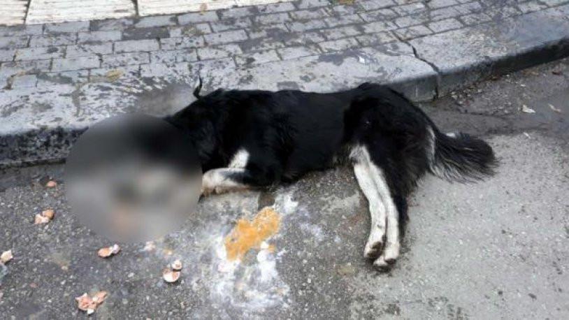 Sokak hayvanlarını öldürdüğünü itiraf etti serbest bırakıldı !