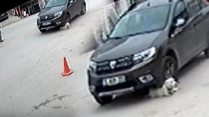 Çarptığı köpek telef olmuştu ! O sürücüye ceza verildi