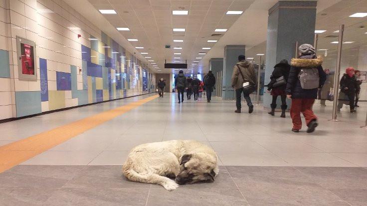 İstanbul'da sokak hayvanları metroya sığındı