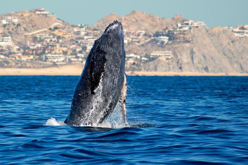 Okyanuslar tehdit altında! Balinalar ve yunuslar gelecek yüzyılı göremeyecek - Resim: 3