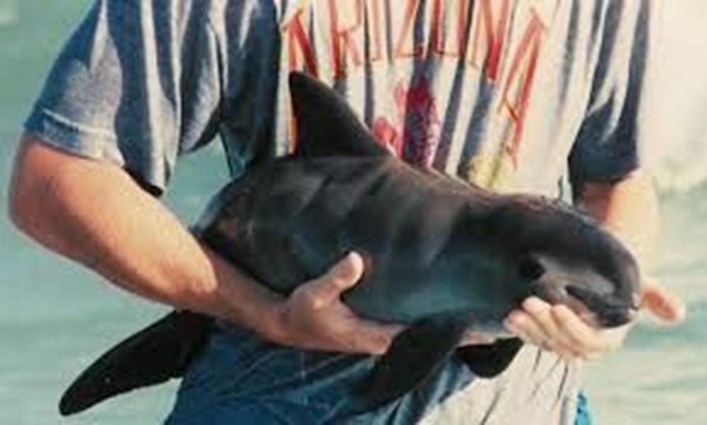 Okyanuslar tehdit altında! Balinalar ve yunuslar gelecek yüzyılı göremeyecek - Resim: 4
