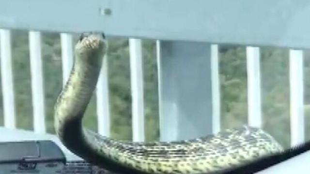 Aracıyla giderken hayatının şokunu yaşadı! Kaputtan yılan çıktı