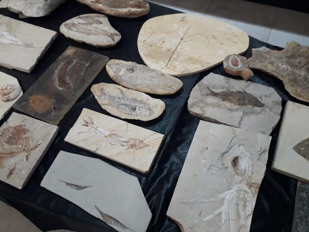 Adnan Oktar'ın milyon dolarlık fosilleri bulundu!  - Resim: 3