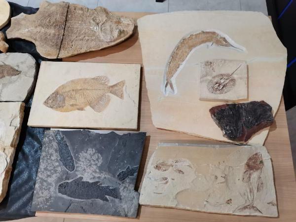 Adnan Oktar'ın kaçak fosilleri, MTA Müzesi'ne teslim edildi!