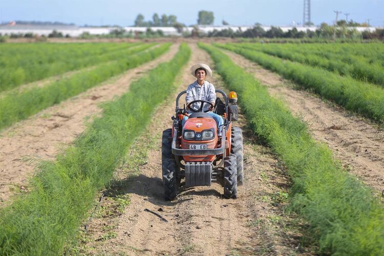 Müdürlükten çiftçiliğe... 5 yılda üretimi 100 kat artırdı!