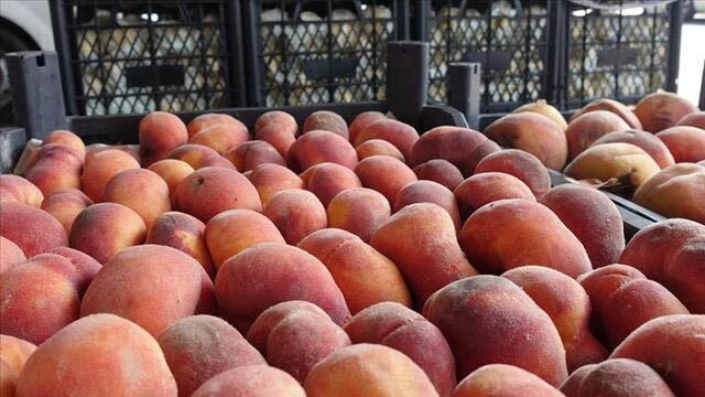 14 milyon 946 bin dolar! İşte Rusya'ya en çok ihracat yapılan meyve