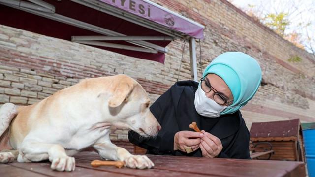 Emine Erdoğan engelli köpek ''Leblebi''yi sahiplendi