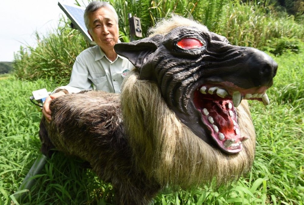 ''Canavar Kurt'' tarlayı böyle ayılardan koruyor - Resim: 3